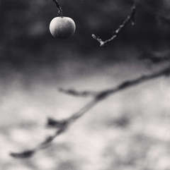 Winter Apple, Chateau de Haroue, Lorraine, France