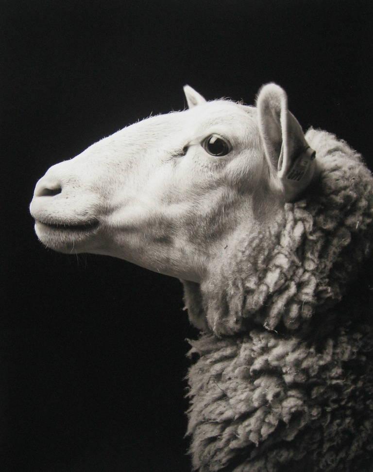 Kevin Horan Portrait Photograph - Lizzie #1