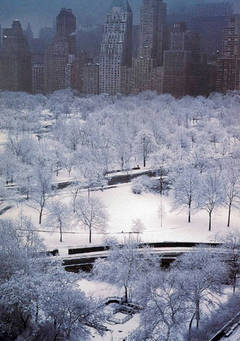 White Trees, NYC