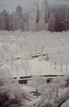 White Trees, NYC