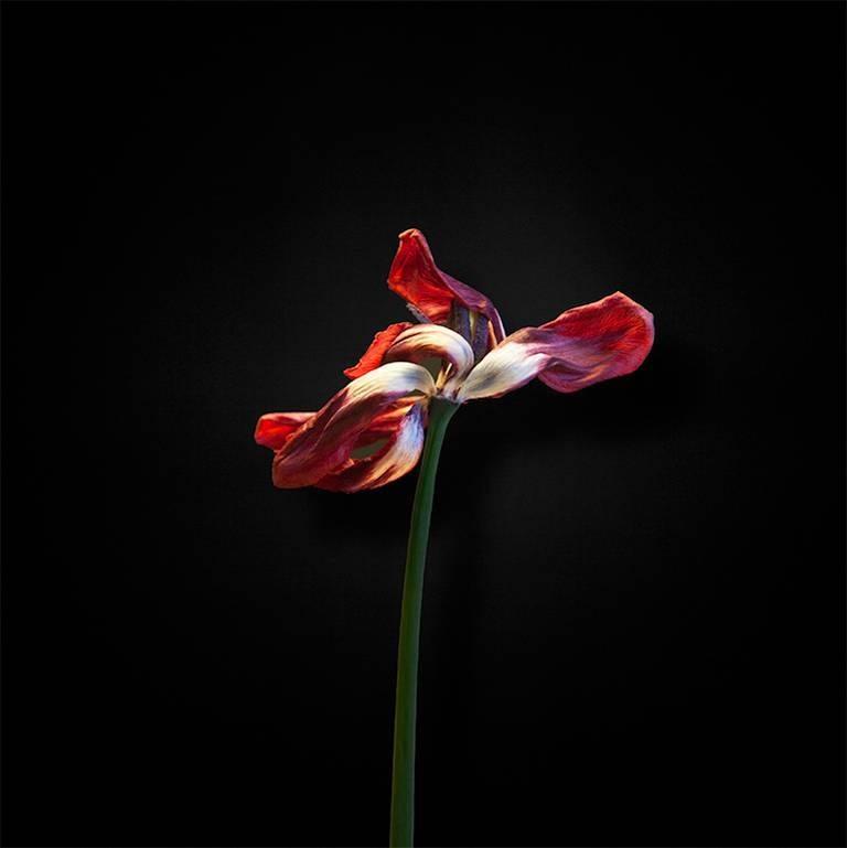 Flower #10A