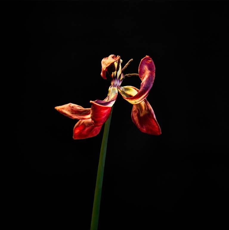 John Herrin Still-Life Photograph - Flower #4