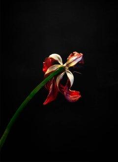 John Herrin - Flower #1
