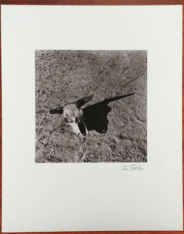 The Bleached Skull of a Steer on the Sun-Baked Earth of South Dakota Badlands - Modern Photograph by Arthur Rothstein
