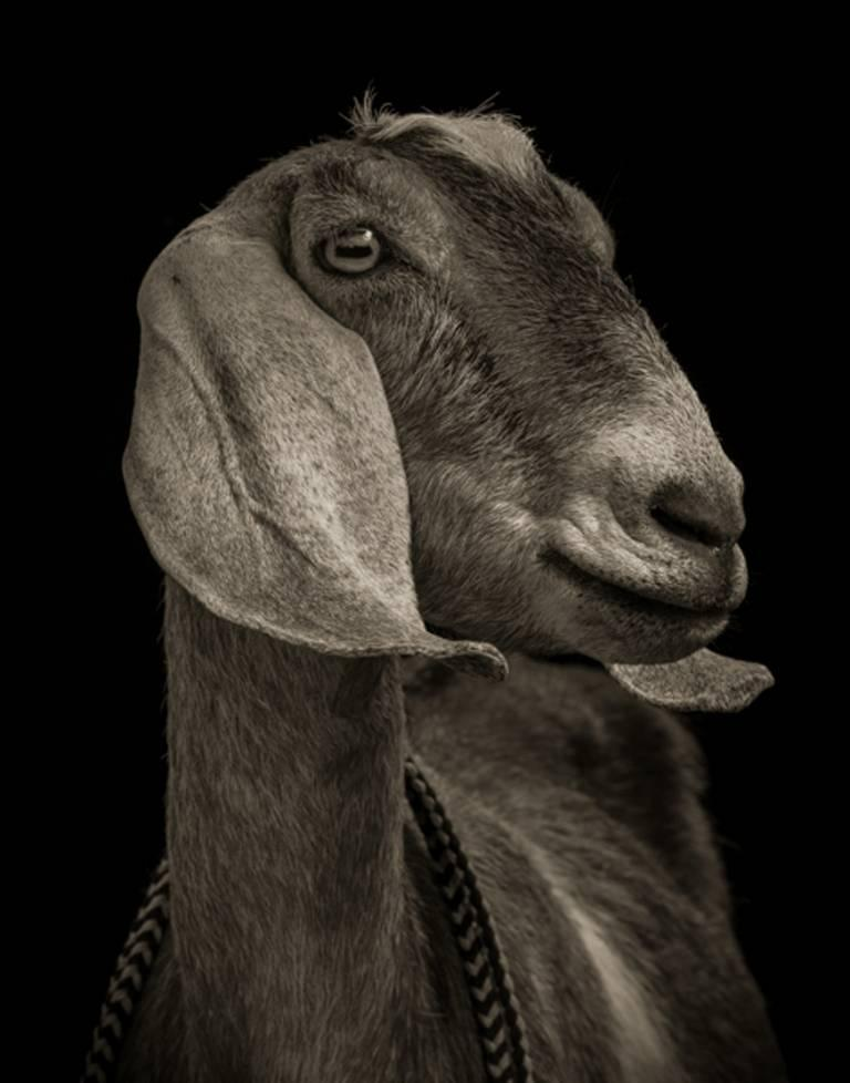 Edition of 8 Signed, titled, dated, numbered and copyright.  AVAILABLE SIZES: 13 x 17 in. $1000 24 x 30 in. $2100  Kevin Horan is a photographer based in Langley, Washington, USA. He is working on projects which look at animals as people, people as