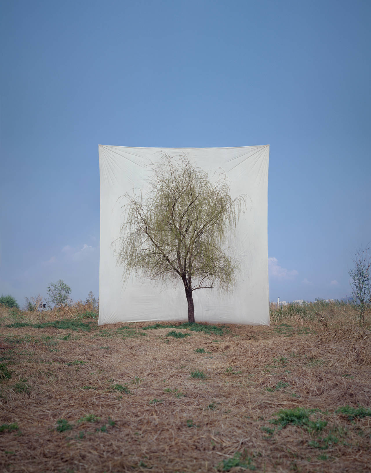 Myoung Ho Lee Tree 7 Photograph For Sale At 1stdibs