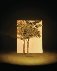 Tree #4
