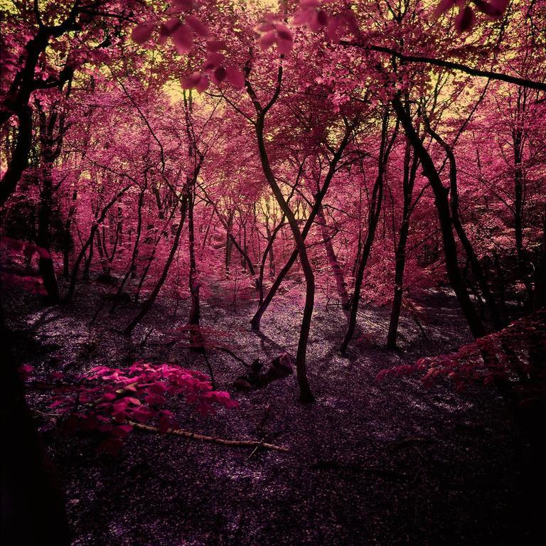 Albert Delamour Landscape Photograph - Wonderland