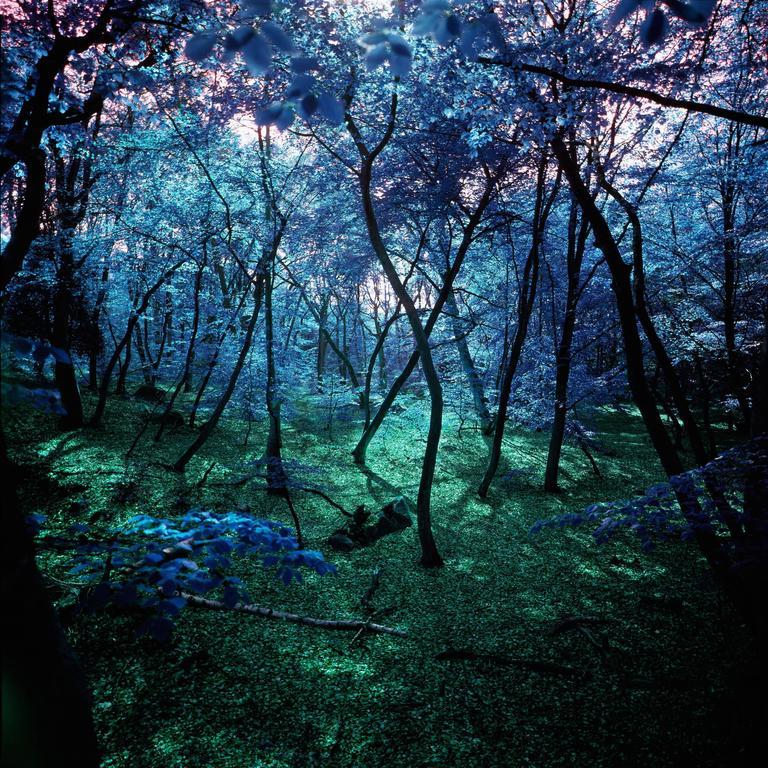 Albert Delamour - Wonderland  1