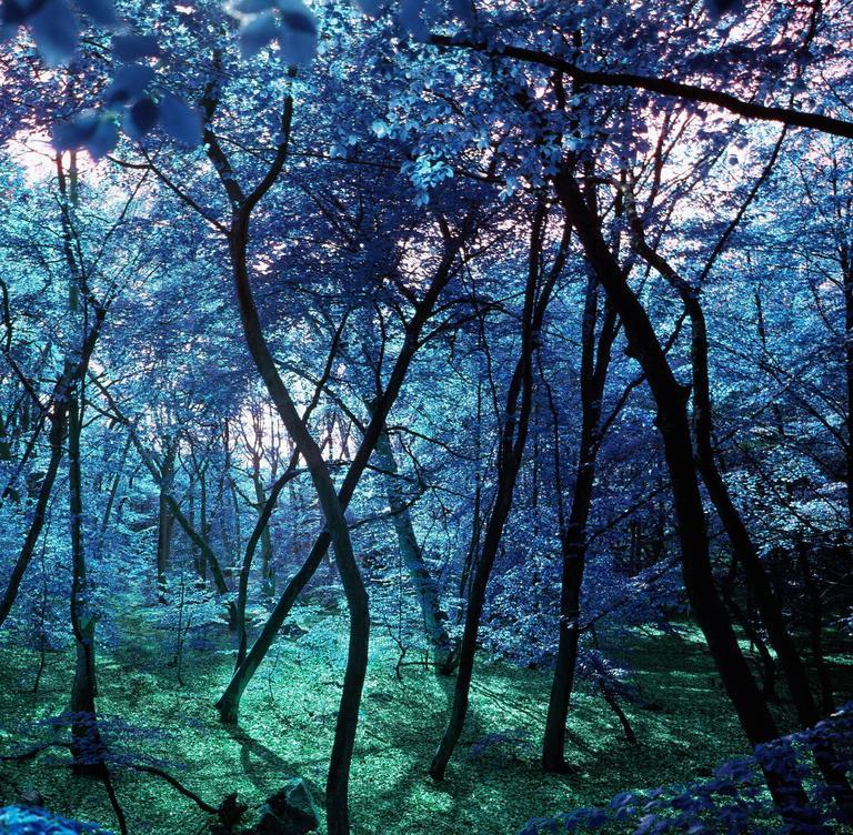 Wonderland  - Photograph by Albert Delamour