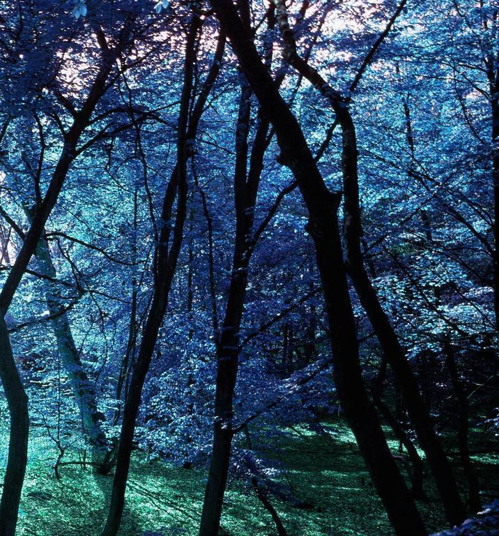 Wonderland  - Black Landscape Photograph by Albert Delamour