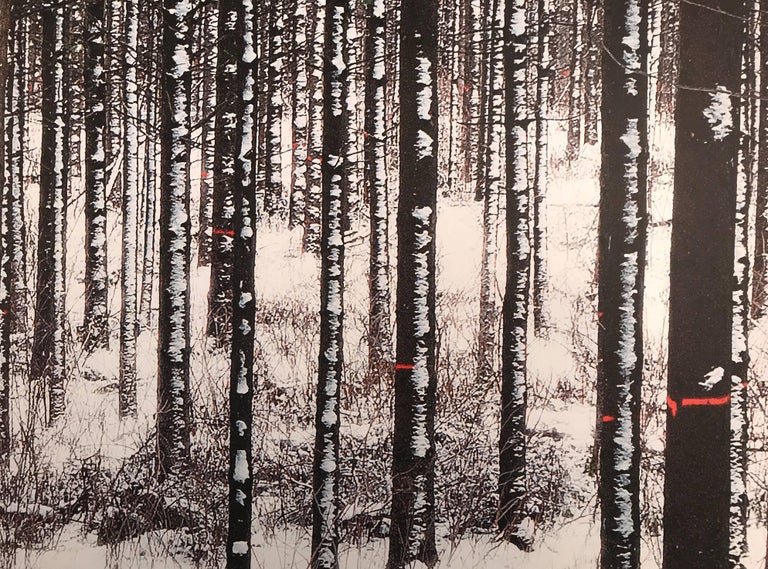Forest with white trees, Birch forest,  - Photograph by Albert Delamour