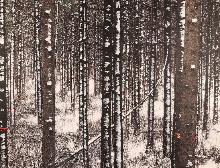 Albert Delamour Color Photograph - Forest with white trees, Birch forest,