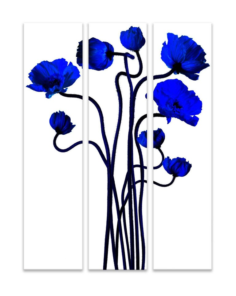 Blue Flowers with long stems, Blue Poppies, Popping Klein