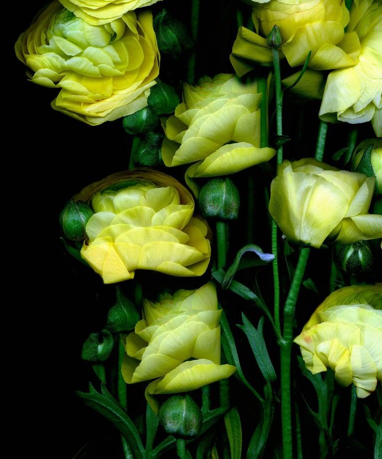 Albert delamour flower bouquet of yellow flowers on black flower bouquet of yellow flowers on black background by albert delamour for sale 2 mightylinksfo