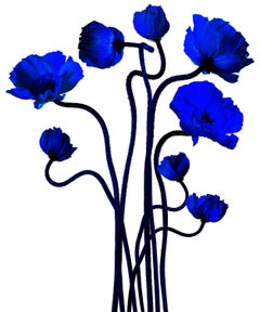 Flower bouquet of Blue poppies, Popping Klein by Albert Delamour