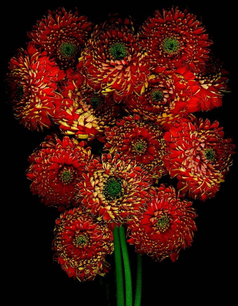 Flower bouquet of Orange Flowers on black background by Albert Delamour