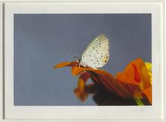 Love Prints - Eastern Tailed-Blue Butterfly