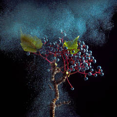 Ivy Berry (Modern Fruit Still Life Photograph of Grapes with Blue Paint Details)