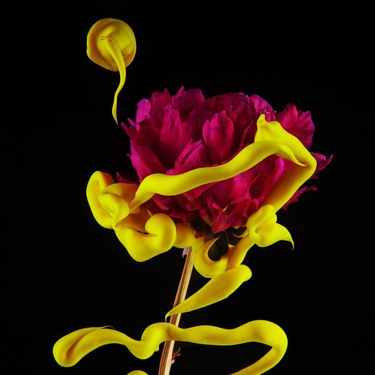 Newbold Bohemia Still-Life Photograph - Peony (Floral Still Life Photograph of Magenta Flower with Yellow Paint Details)