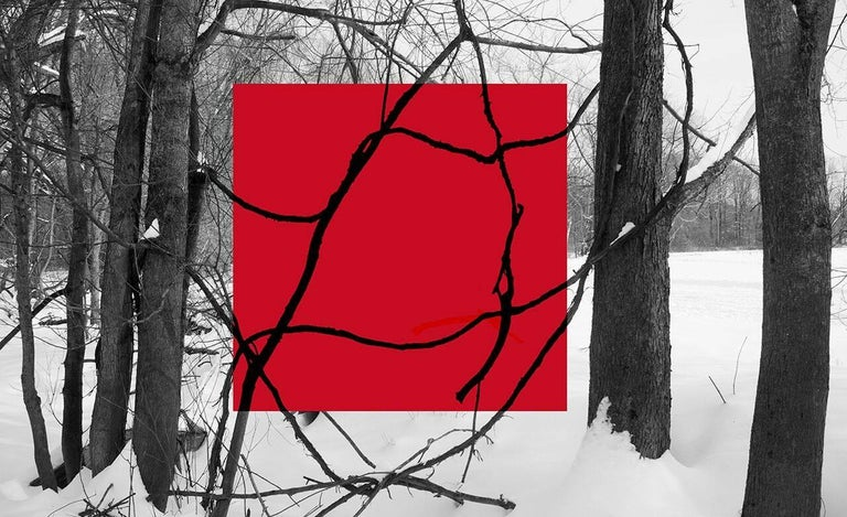 Stephanie Blumenthal Landscape Photograph - Red Square (Modern Abstract B&W Gestural Tree Outlines with Graphic Red Square)