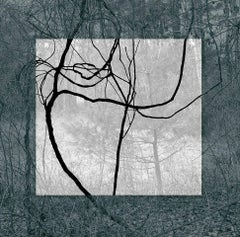 Blue Black (Contemporary Landscape Photo with Lyrical Vines and Geometric Shape)
