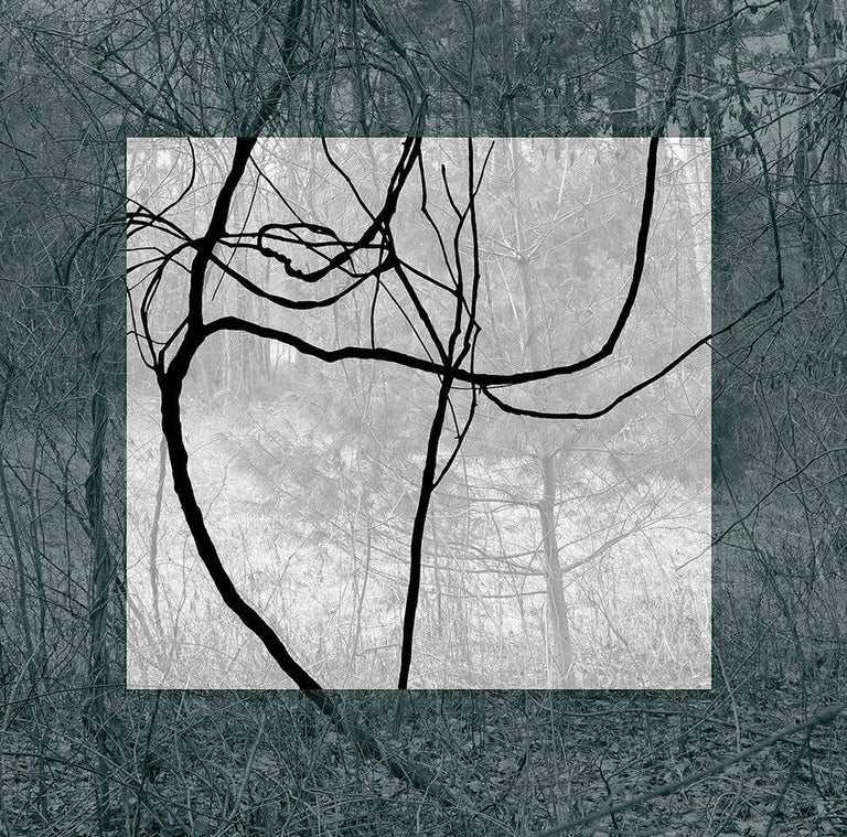 Stephanie Blumenthal Abstract Photograph - Blue Black (Contemporary Landscape Photo with Lyrical Vines and Geometric Shape)