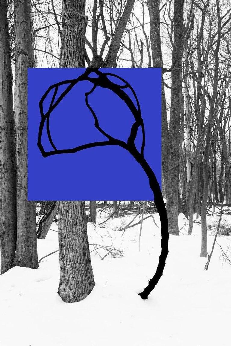 Stephanie Blumenthal Landscape Photograph - Blue 762: Abstracted Black & White Landscape Photo, Black Vine on Blue Square