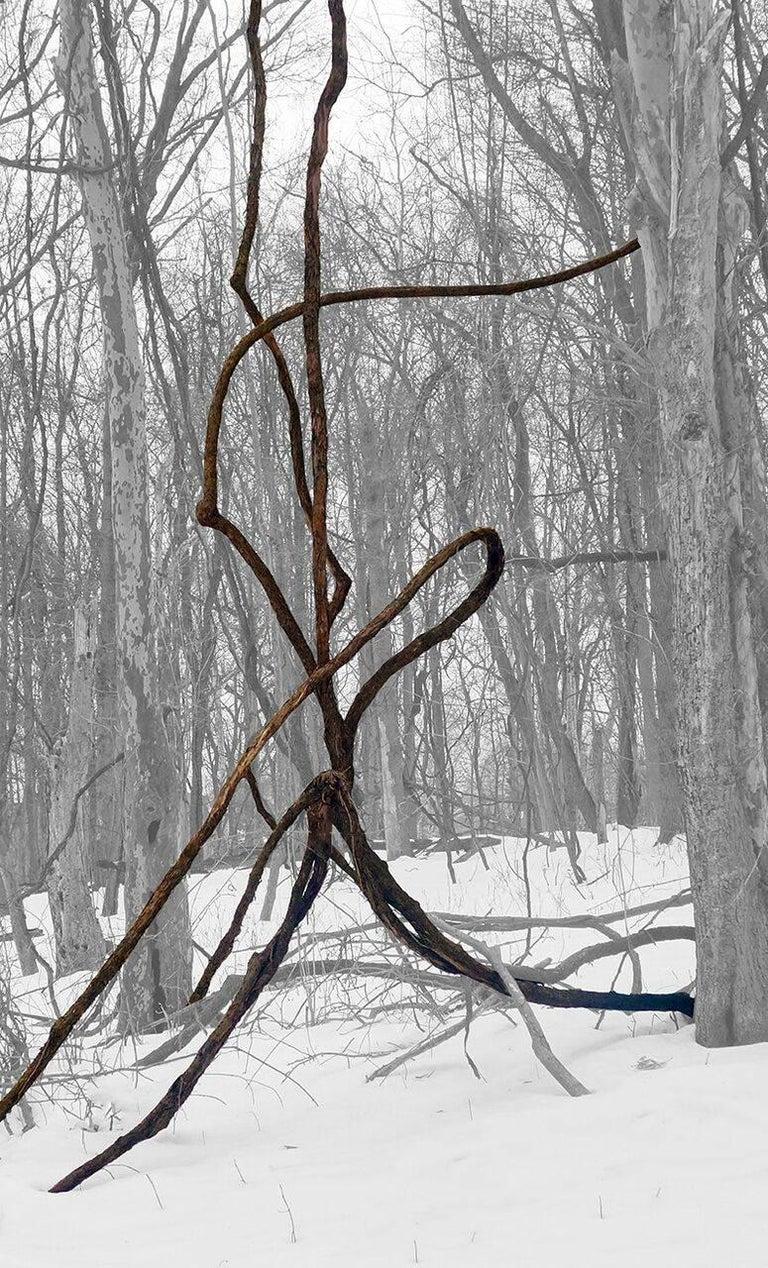 Stephanie Blumenthal Landscape Photograph - Vine in Snow (Abstracted Landscape Photo of Dark Vine in Black & White Forest)