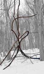 Vine in Snow (Abstracted Landscape Photo of Dark Vine in Black & White Forest)
