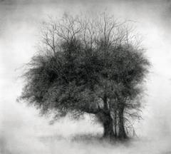 Lone Star (Modern Realist Charcoal Drawing of Detailed Tree on Arches Paper)