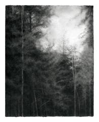Woodland, Skyward (Modern Realist Charcoal Drawing of Wooded Forest)