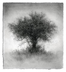 Elsewhere (Small Contemporary Charcoal Landscape Drawing of a Single Tree)
