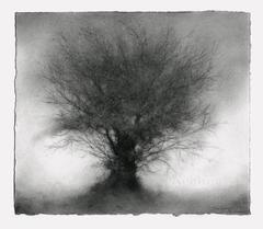 Fledgling (Small, Contemporary Charcoal Landscape Drawing of Small Tree)