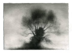 Kernel (Realist Black & White Charcoal Drawing of Large, Single Standing Tree)