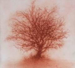 Red Tree 4 (Modern, Realistic Red Sanguine Chalk Single Tree Drawing)
