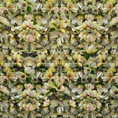Magnolias Breaking Pattern (Abstracted Still Life Photo of Yellow Magnolias)