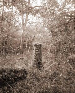 Stump (Contemporary Archival Pigment Print, Sepia Tone Landscape of Forest)