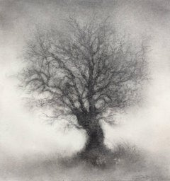 Sapling (Contemporary Realistic Landscape Charcoal Drawing of Single Tree)