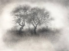 Two Trees (Contemporary Realistic Landscape Drawing in Black Charcoal)