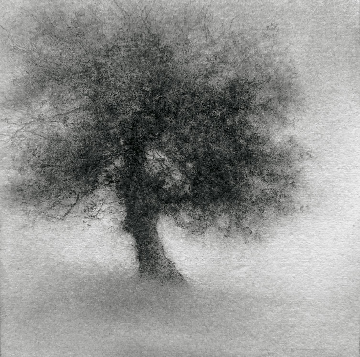 Minikin III (Modern, Small Realistic Tree Drawing on Square Wood Panel)