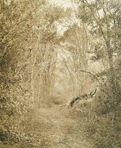 Silver Road (Contemporary Archival Pigment Print Sepia Tone Landscape of Forest)
