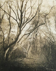Twisted Trees (Contemporary Archival Pigment Print, Sepia Tone Wooded Landscape)