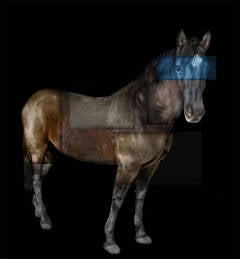 Standing Horse (Sage, Blue Eyes)