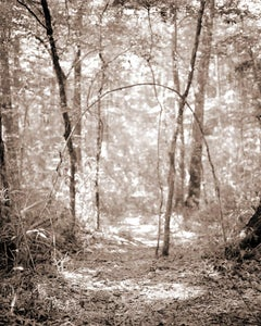 Archway (Contemporary Archival Pigment Print, Sepia Tone Landscape of Forest)