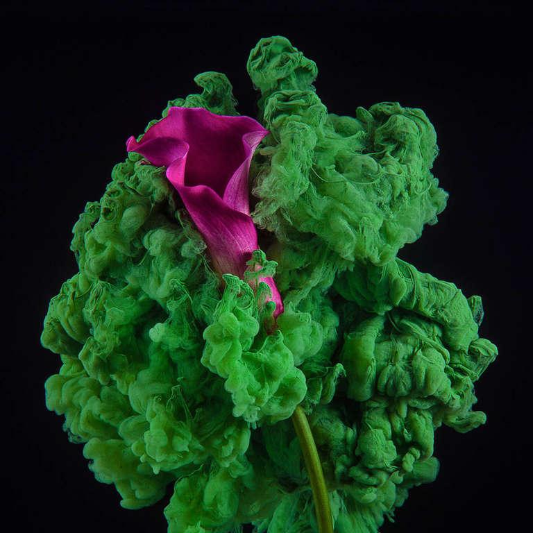 Calla (Modern Still Life Photograph of Magenta Flower with Green Paint Details)