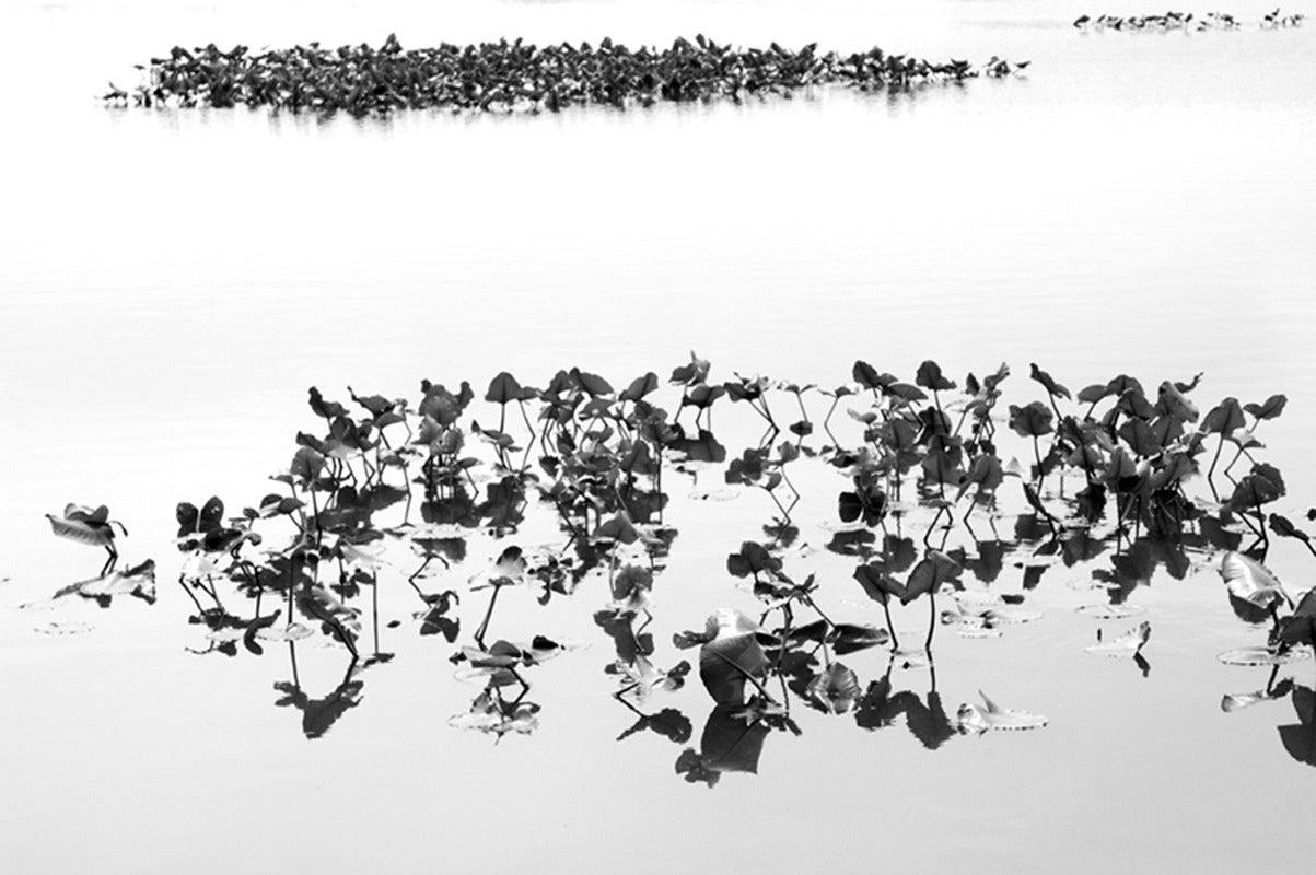 Shirokuro XXVII (Black and White Abstract Photo of Lilypads on Water)