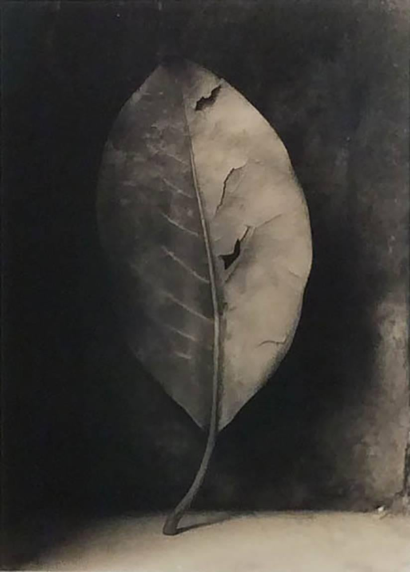 Magnolia Leaf (Framed Sepia Toned Still Life Photograph of Single Leaf)