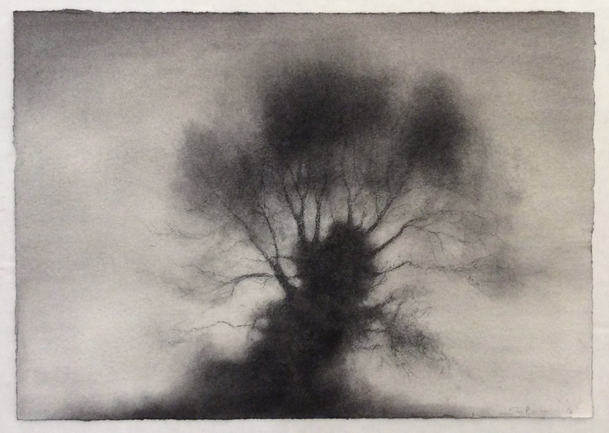 Kernel realist black white charcoal drawing of large single standing tree