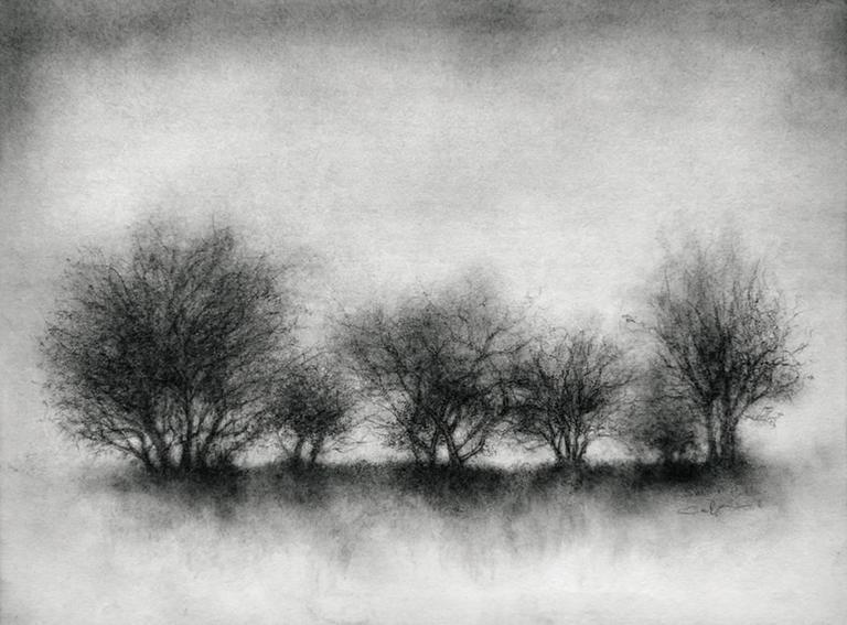 13ecfae2190 Sue Bryan Landscape Art - Tribe (Realist Black & White Landscape Charcoal  Drawing of Trees